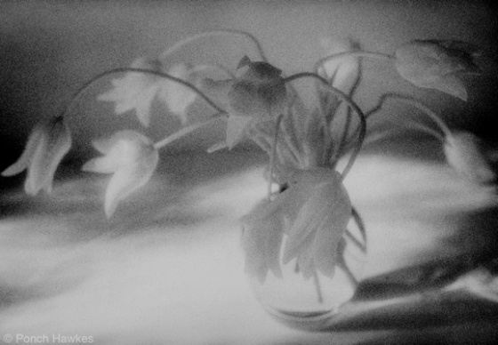 "<h4 style=""margin:0px 0px 5px 0px;"">(E) Shimmering Tulips</h4>Medium: silver gelatin print<br />Price: $400 <span style=""color:#aaa"">