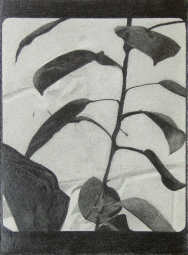 "<h4 style=""margin:0px 0px 5px 0px;"">Untitled 1</h4>Medium: Graphite<br />Price: Sold <span style=""color:#aaa"">