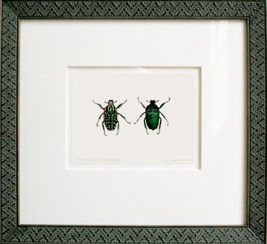 "<h4 style=""margin:0px 0px 5px 0px;"">Chelorhina polyphemus (framed)</h4>Medium: Watercolour<br />Price: Sold <span style=""color:#aaa"">