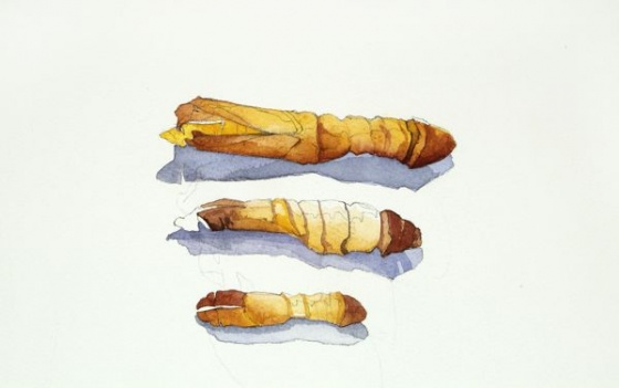 "<h4 style=""margin:0px 0px 5px 0px;"">Helens Cicada Laval Cases</h4>Medium: Watercolour & graphite<br />Price: $2,300 <span style=""color:#aaa"">