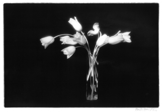 (E) White Tulips by Ponch Hawkes