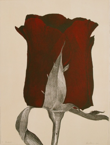 "<h4 style=""margin:0px 0px 5px 0px"">Rosebud by Kristin Headlam</h4>Medium: Lithograph<br />Price: $1,320 