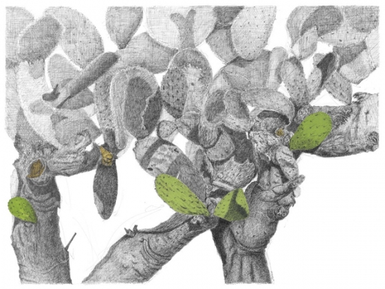 "<h4 style=""margin:0px 0px 5px 0px"">Opuntia stricta</h4>Medium: Pen, ink  &amp; gouache Unframed<br />Price: $2,500 