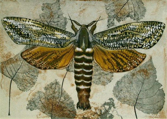 "<h4 style=""margin:0px 0px 5px 0px"">Acacia Carpenter Moth (Xyleutes eucalypti)</h4>Medium: Etching<br />Price: $950 