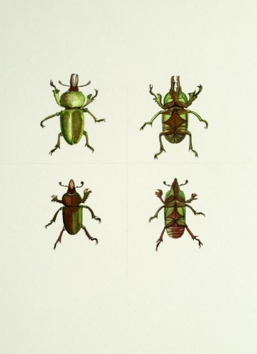 "<h4 style=""margin:0px 0px 5px 0px"">Beetle pair, gold &amp; green</h4>Medium: Watercolour<br />Price: Sold 