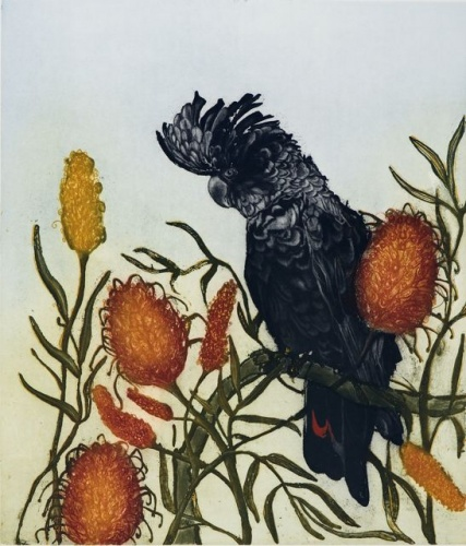 "<h4 style=""margin:0px 0px 5px 0px""> Black Cockatoo with Banksia</h4>Medium: Etching<br />Price: $1,550 