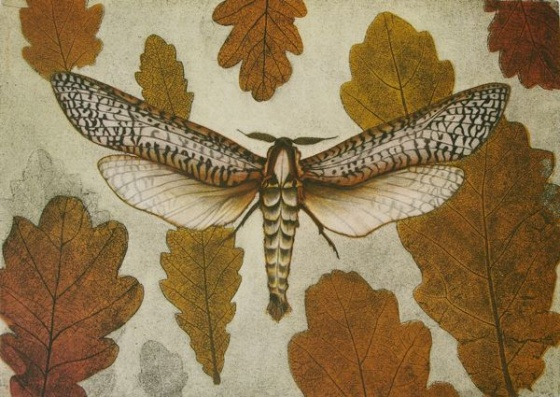 "<h4 style=""margin:0px 0px 5px 0px"">Carpenter Moth (Endoxyla vittata)</h4>Medium: Etching<br />Price: $950 