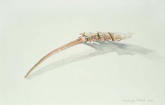 "<h4 style=""margin:0px 0px 5px 0px;"">Crayfish feeler</h4>Medium: Watercolour & graphite<br />Price: Sold <span style=""color:#aaa"">