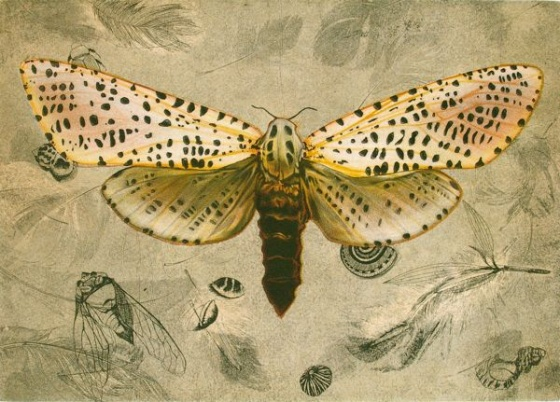 "<h4 style=""margin:0px 0px 5px 0px;"">Leopard Moth (Zeuzera Pyrina)</h4>Medium: Etching<br />Price: $950 <span style=""color:#aaa"">