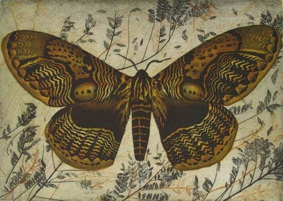 "<h4 style=""margin:0px 0px 5px 0px"">Owl Moth (Brahmaea Wallichii)</h4>Medium: Etching<br />Price: $950 