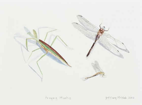 "Praying Mantis<br /><br />Medium: Watercolour<br />Price: Sold<br /><a href=""Artwork-McNab-PrayingMantis-2442.htm"">View full artwork details</a>"