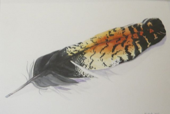 "Red-tailed Black Cockatoo Feather<br /><br />Medium: Watercolour<br />Price: Sold<br /><a href=""Artwork-McNab-RedtailedBlackCockatooFeather-2452.htm"">View full artwork details</a>"