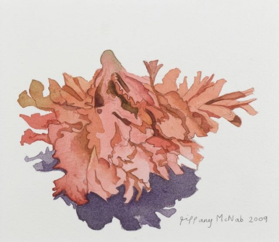 "Sea Sponge<br /><br />Medium: Watercolour<br />Price: Sold<br /><a href=""Artwork-McNab-SeaSponge-2441.htm"">View full artwork details</a>"