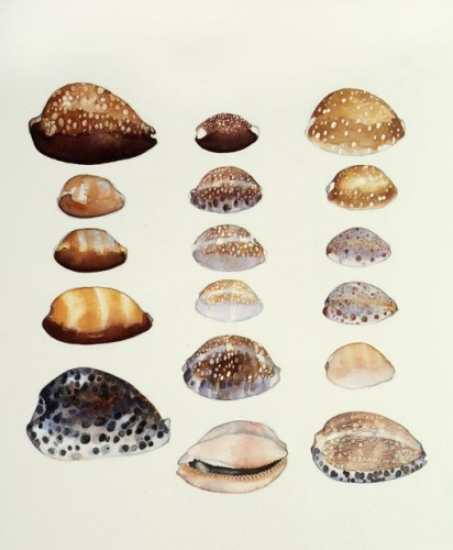 "<h4 style=""margin:0px 0px 5px 0px"">Cowries by Tiffany McNab</h4>Medium: Watercolour<br />Price: Sold<span class=""helptip"" style=""color:#ff0000;"" title=""This artwork been sold""><img src=""/images/reddot1.gif"" border=""0"" height=""10"" /></span> 
