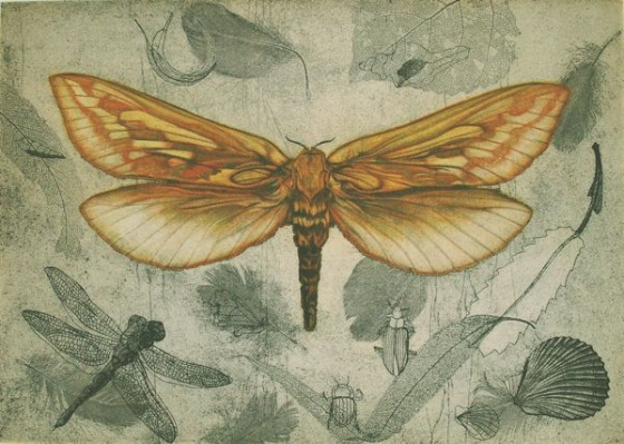 "<h4 style=""margin:0px 0px 5px 0px"">Ghost Moth (Hepialus Humuli) by Tiffany McNab</h4>Medium: Etching<br />Price: $950 