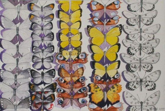 "<h4 style=""margin:0px 0px 5px 0px"">Glasswings by Tiffany McNab</h4>Medium: Watercolour &amp; graphite<br />Price: Sold<span class=""helptip"" style=""color:#ff0000;"" title=""This artwork been sold""><img src=""/images/reddot1.gif"" border=""0"" height=""10"" /></span> 