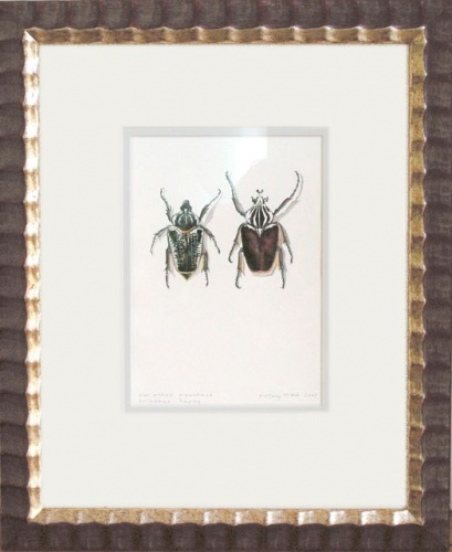 "<h4 style=""margin:0px 0px 5px 0px"">Goliathus giganteus - Goliathus regius (framed) by Tiffany McNab</h4>Medium: Watercolour<br />Price: Sold<span class=""helptip"" style=""color:#ff0000;"" title=""This artwork been sold""><img src=""/images/reddot1.gif"" border=""0"" height=""10"" /></span> 