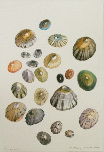 "<h4 style=""margin:0px 0px 5px 0px"">Limpets by Tiffany McNab</h4>Medium: Watercolour &amp; graphite<br />Price: Sold<span class=""helptip"" style=""color:#ff0000;"" title=""This artwork been sold""><img src=""/images/reddot1.gif"" border=""0"" height=""10"" /></span> 