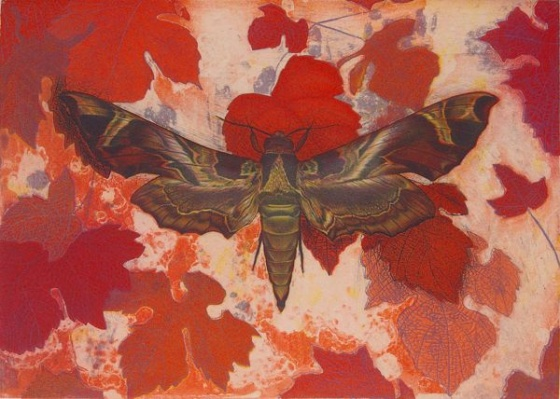 "<h4 style=""margin:0px 0px 5px 0px"">Oleander Hawk Moth (Daphnis Nerii) by Tiffany McNab</h4>Medium: Etching<br />Price: $950 