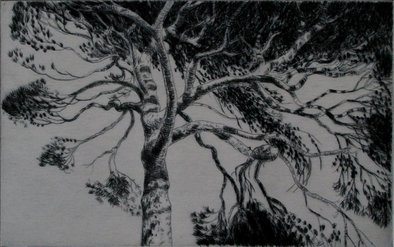 "<h4 style=""margin:0px 0px 5px 0px"">Canopy I by John Spooner</h4>Medium: Drypoint<br />Price: $250 