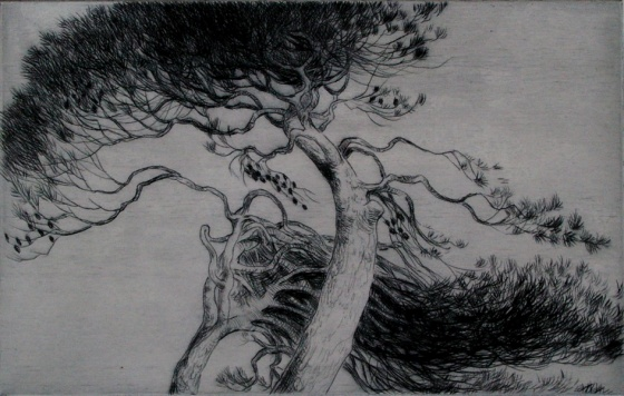"<h4 style=""margin:0px 0px 5px 0px"">Canopy II by John Spooner</h4>Medium: Drypoint<br />Price: $250 