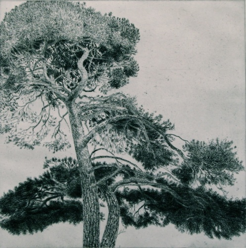 "<h4 style=""margin:0px 0px 5px 0px"">Williamstown Tree #3 by John Spooner</h4>Medium: Etching & drypoint<br />Price: $700 