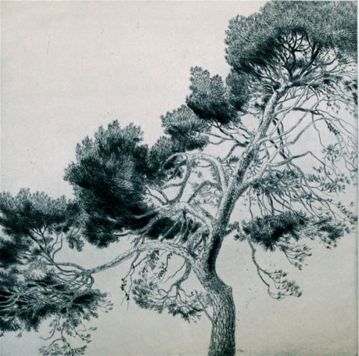 "<h4 style=""margin:0px 0px 5px 0px"">Williamstown Tree #4 by John Spooner</h4>Medium: Etching & drypoint<br />Price: $700 
