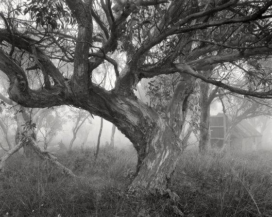 "Snow Gum and CRB Hut<br /><br />Medium: Silver Gelatin Print<br />Price: $1,500<br /><a href=""Artwork-Tatnall-SnowGumandCRBHut-3118.htm"">View full artwork details</a>"